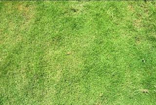 Cara Membuat Taman Rumput di Rumah