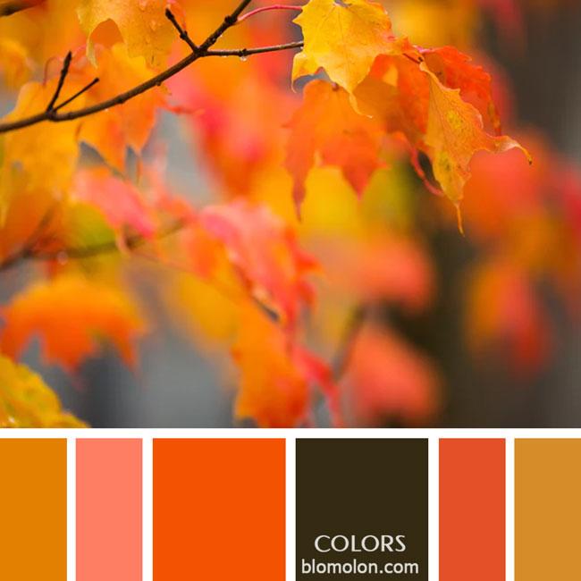 variedad_en_color_paletas_de_colores_35
