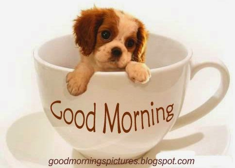 Beautiful Download Cute Good Morning Images Hd Greetings Images