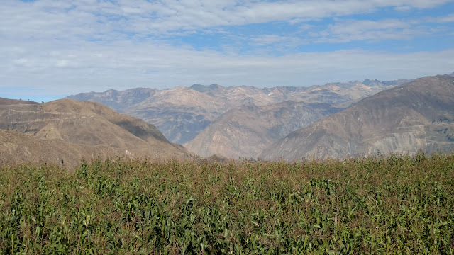 maize in the Colca Canyon