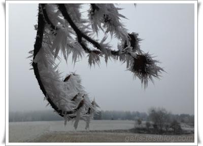 Baum mit Eis