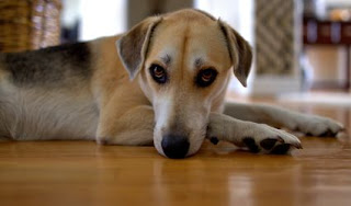 Addressing Dog Problems, Tips for Solving Common Behavior Problems