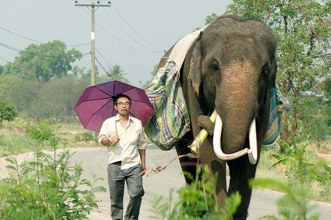 Pop Aye, about a man and his elephant, opens in cinemas here tomorrow