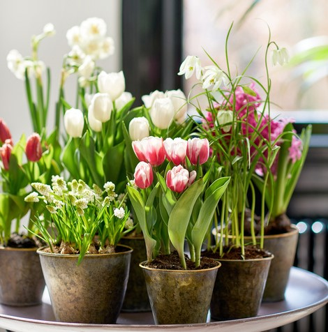 La Primavera dentro de casa es posible.
