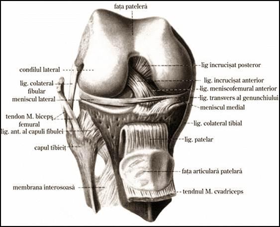 reparația cartilajului genunchiului
