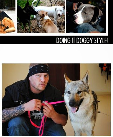 Pit Bull Attacks and Dogfighting in Illinois: 2013
