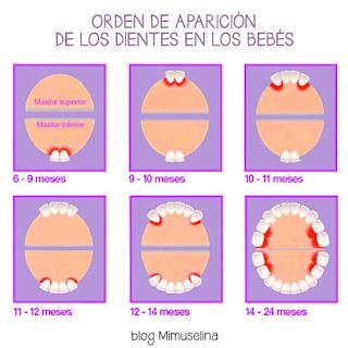 los primeros dientes, aparición de los primeros dientes en el bebé, orden dientes bebé, blog mimuselina