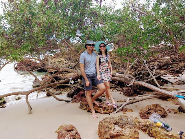 Uma árvore derrubada na praia de Tambaba.