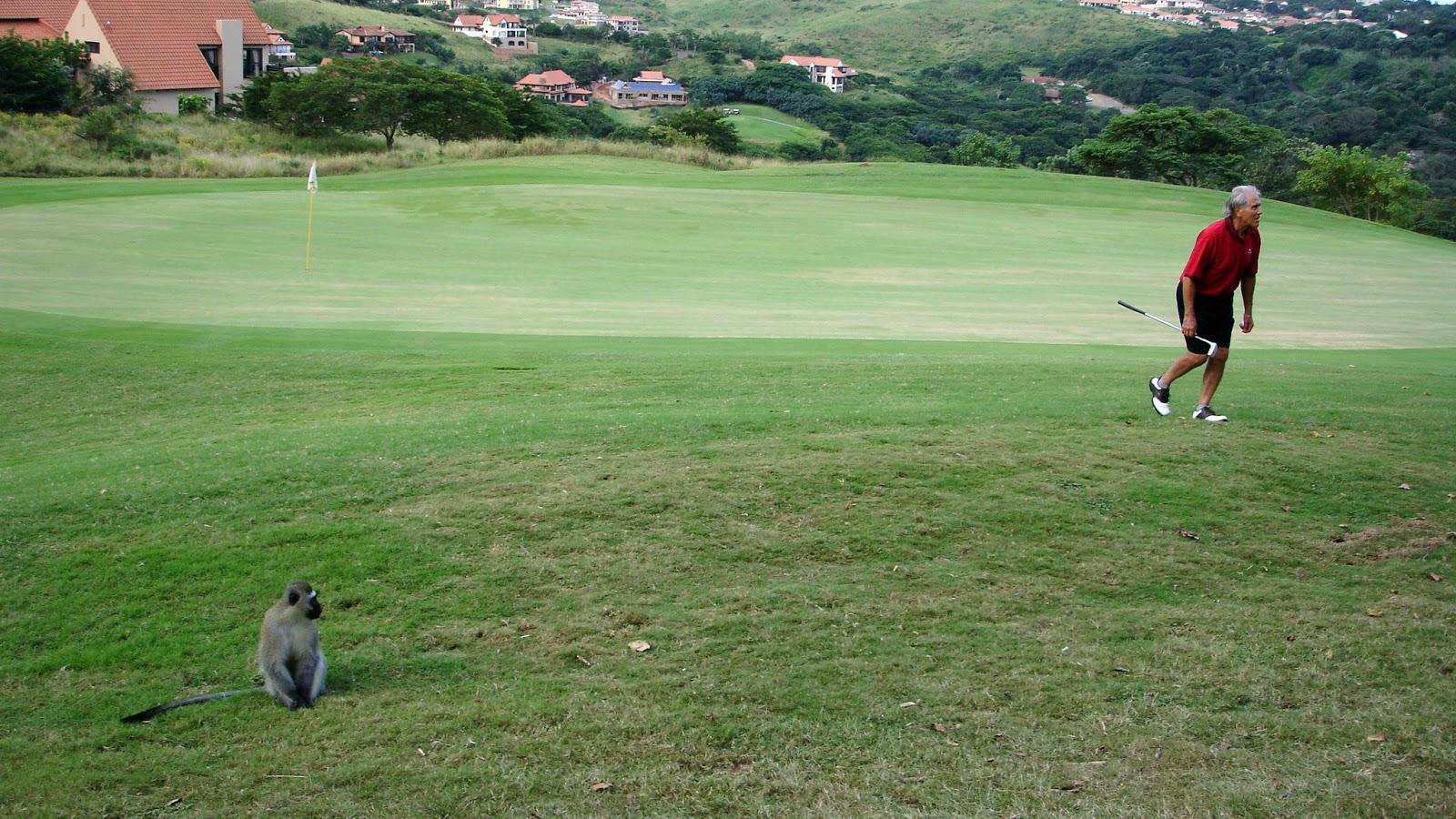 singe parcours golf afrique du sud