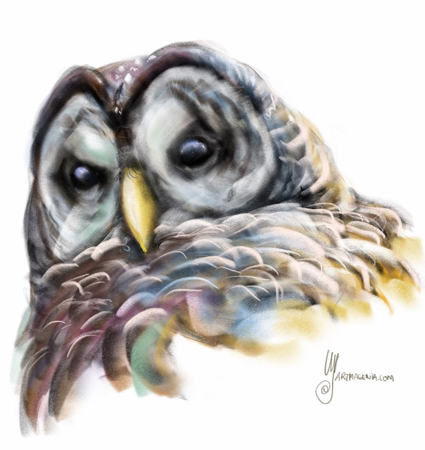 Barred Owl. Bird painting by Artmagenta