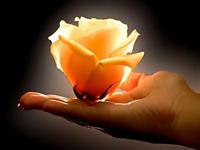 amor+flor+mano+mujer