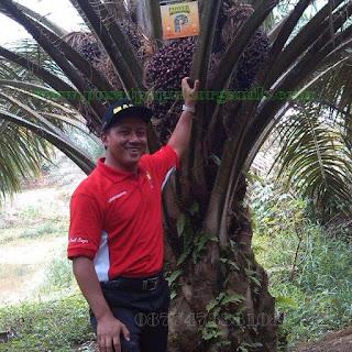 harga pupuk kelapa sawit perhektar