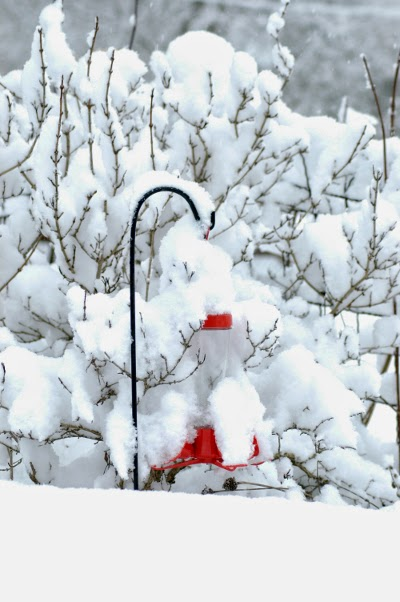 Bird feeder with snow
