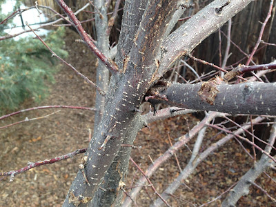 Colorado Garden Punch List Winter Pruning Punch List