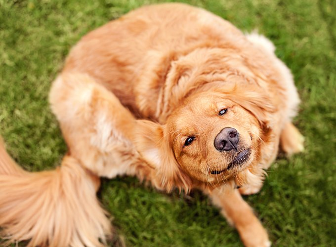 protecting dogs from fleas and ticks