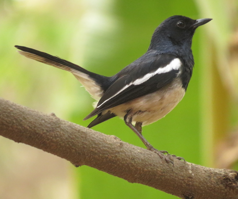 15 Best Places for Birding in Goa You Must Explore