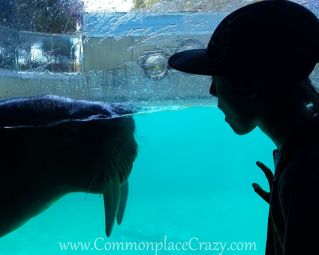 Boy and Walrus meeting