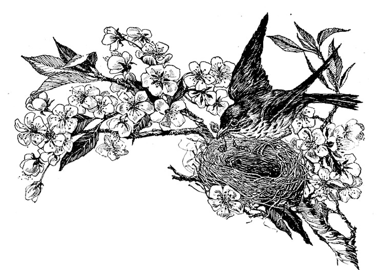 Clipart of a Black and White Bird Nest on a Branch - Royalty Free ... |  Black and white birds, Nest images, White bird