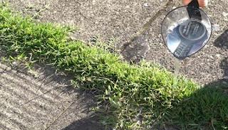 12 πανέξυπνες χρήσεις του ξυδιού στον κήπο ή την αυλή σας που δεν είχατε ποτέ φανταστεί και θα σας λύσουν τα χέρια