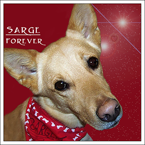 Sarge, forever in our hearts