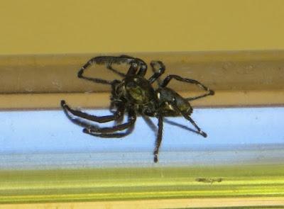 Стоит ли убивать пауков в Таиланде
