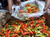 Cabai Rawit Impor dari india Diminati Sebab Lebih Pedas