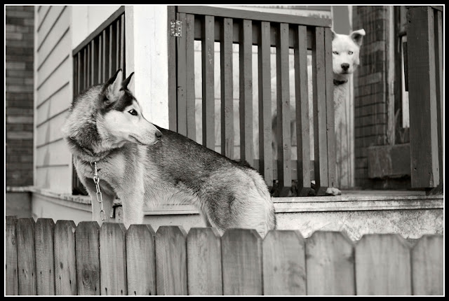 Northside; Cincinnati; Dogs; Fences