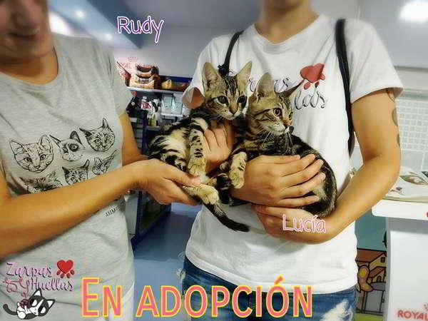 gatitos abandonados en adopción