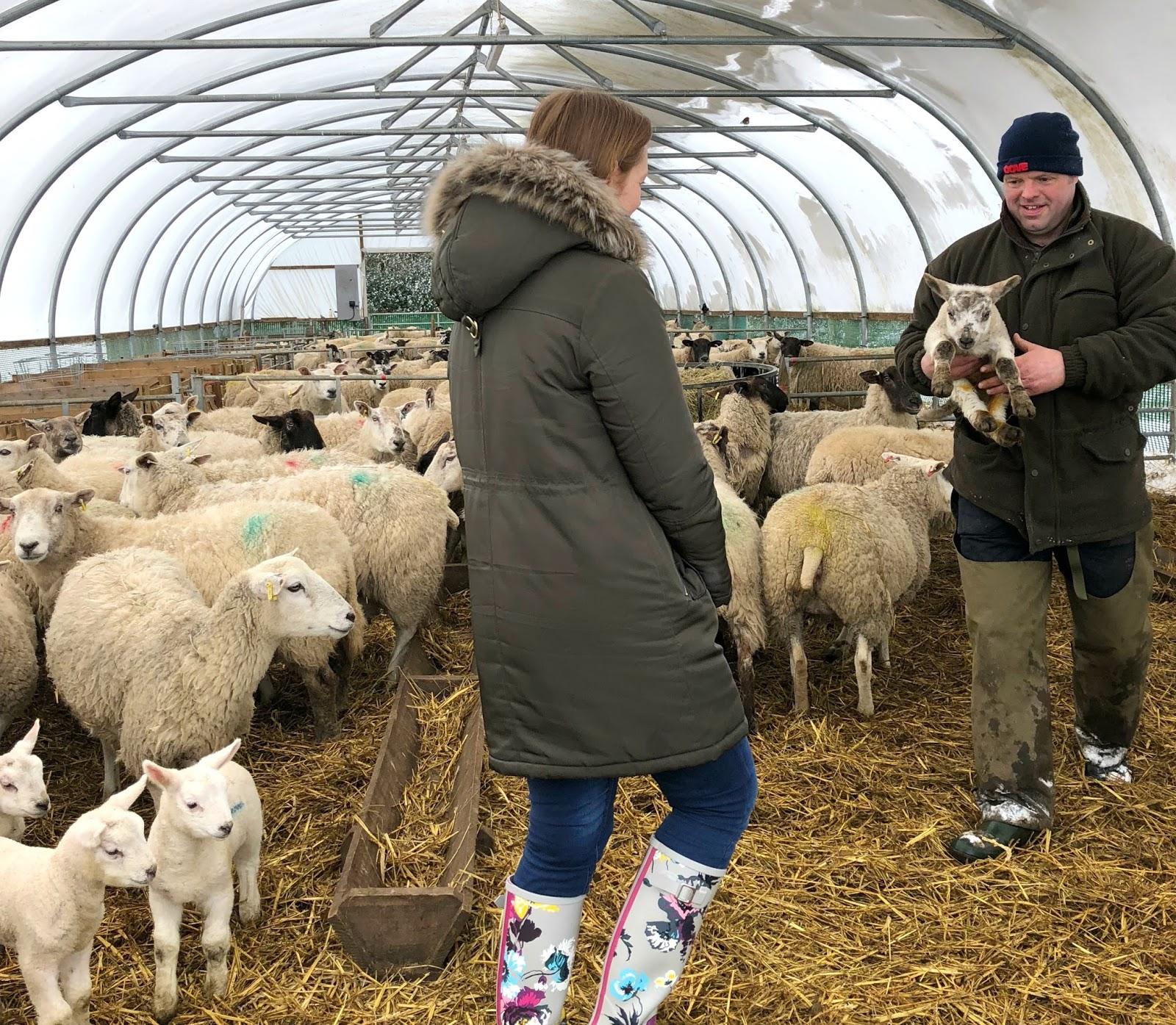 St Oswald's Farm Hexham - Lambing Season