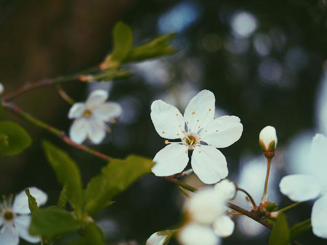 spring-bucket-list-blog-blumenliebe