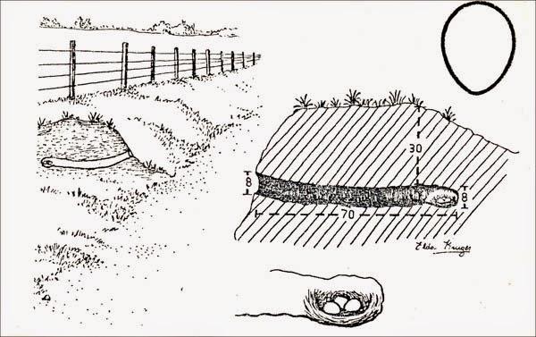 nidos de Camineras