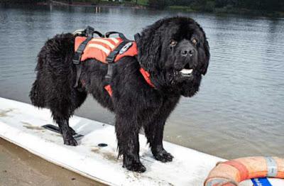 El perro rescatista