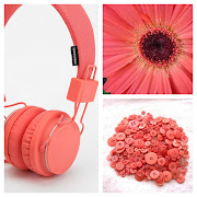 MAY moodboard for GERBERA PETAL