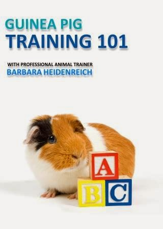 Guinea Pig Training 101 Video