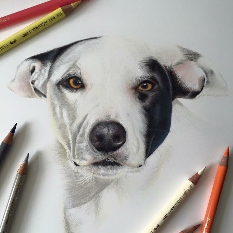 09-Dog-Paul-Miller-Wildlife-and-Domestic-Animal-Drawings-www-designstack-co