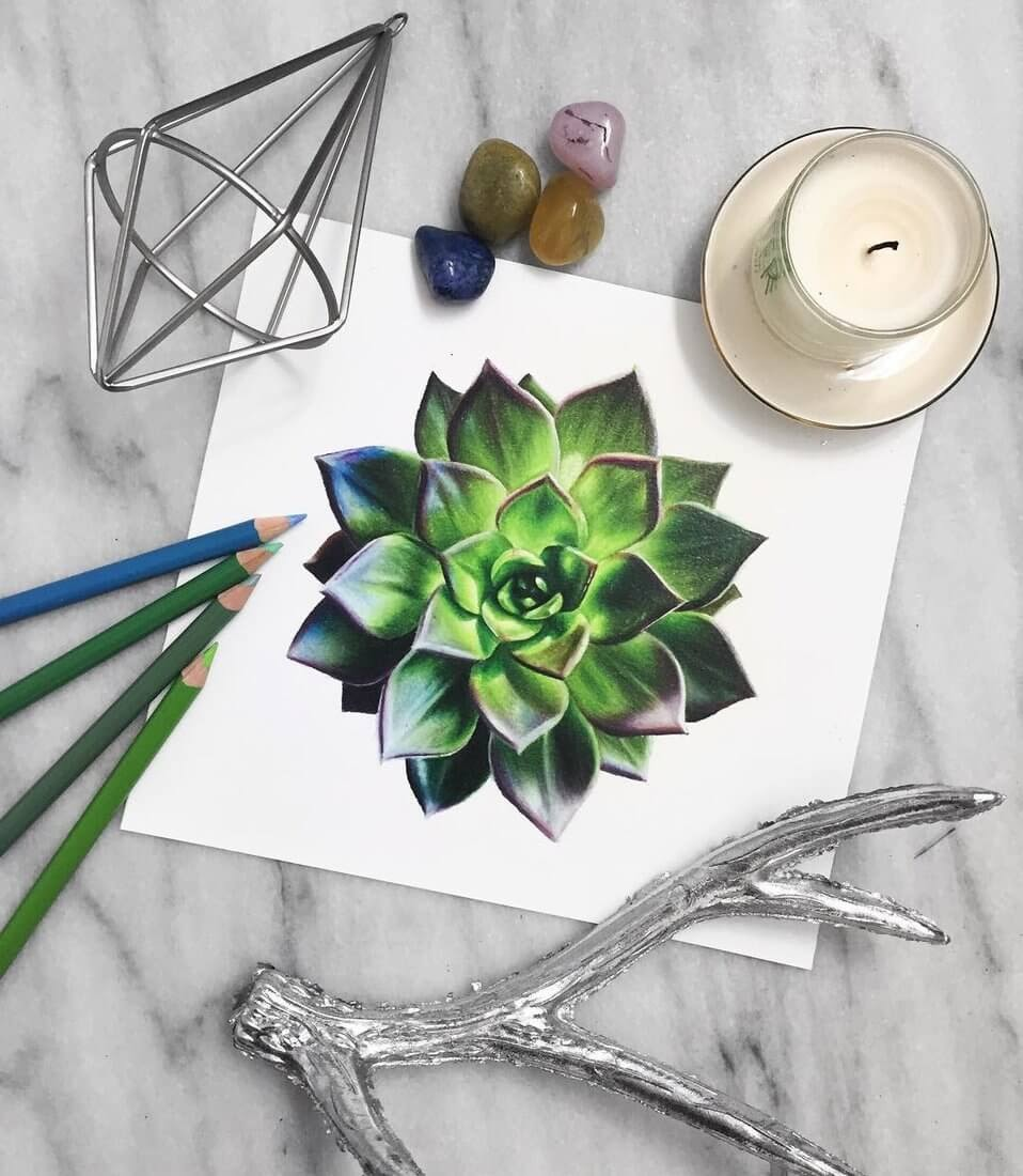12-Succulent-Plant-Safanah-Eclectic-Mixture-of-Realistic-Drawings-www-designstack-co