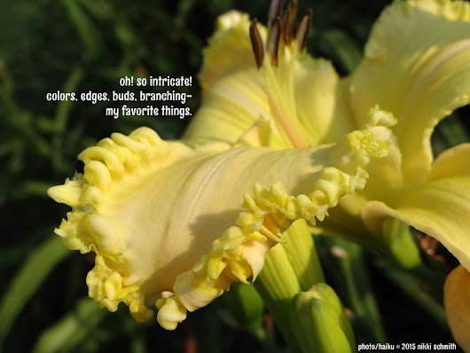 Daylily Haiku Thursday |  It's all happening... ~ a girl and her garden - a daylily blog