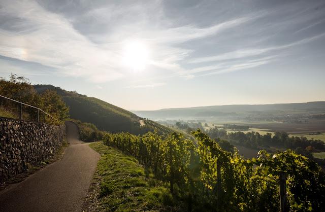 Frühlingsplätzchen: Weinberg vom Wein- und Sektgut Bamberger an der Nahe