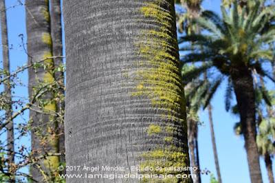 musgo en los troncos de árboles