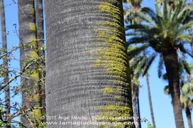 musgo en los troncos de árboles, blogs de jardinería, norte de los árboles, norte de palmeras, orientación árboles