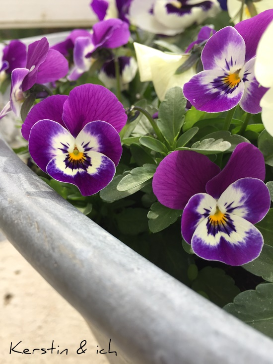 Frühlin Blumen
