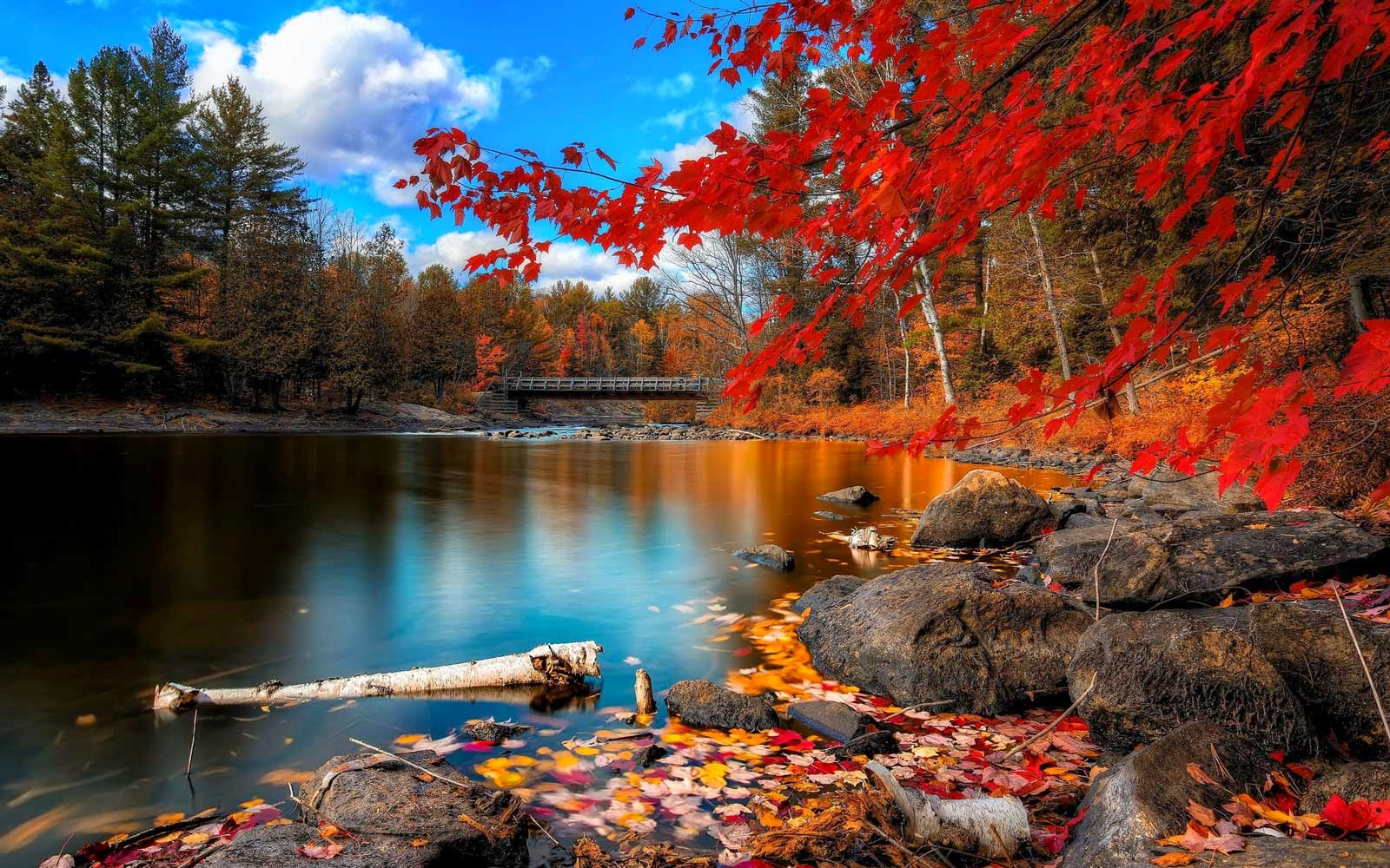 Autumn Lake Tree Leaves Wallpaper