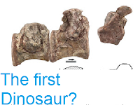 http://sciencythoughts.blogspot.co.uk/2013/04/the-first-dinosaur.html
