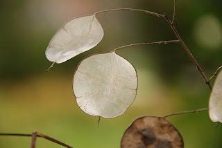 fotografía naturaleza planta verde