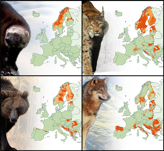 Large carnivores of Europe - Ecoclimax
