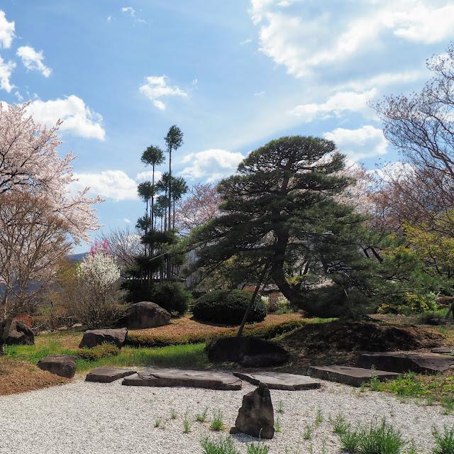 萬休院 桜 日本庭園 舞鶴松
