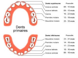 Les dents primaires de votre enfant
