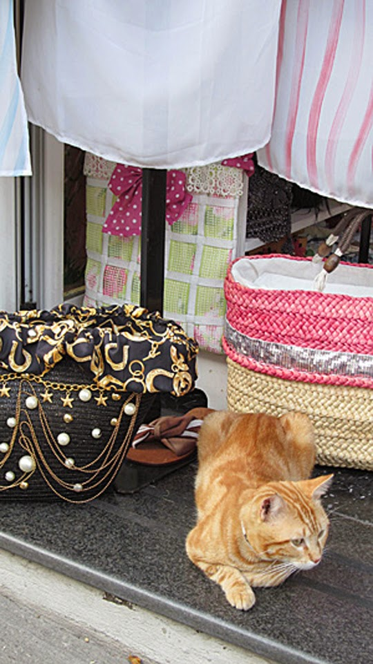 orange cat in shop in Positano