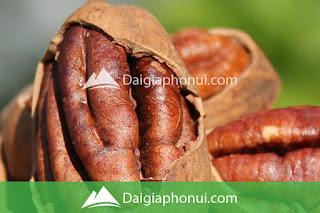 HẠT QUẢ HỒ ĐÀO - PECAN NUTS