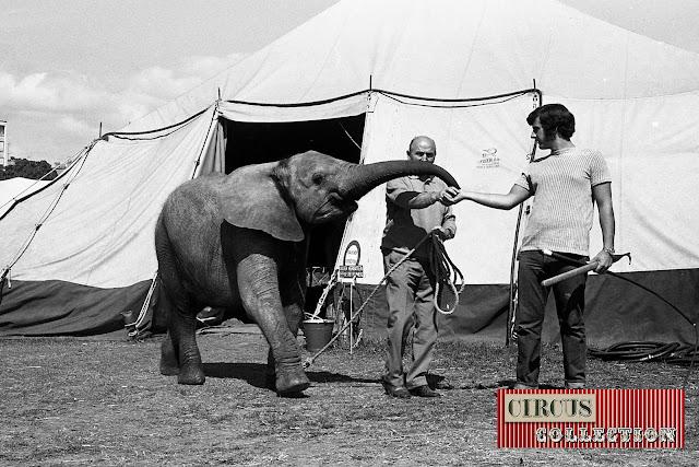 Jeune éléphant d'Afrique avec Louis Knie senior au Cirque National Suisse Knie  1970